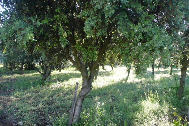 Terrain à bâtir Carpentras Cimetiere juif,   achat terrain à bâtir   946m²