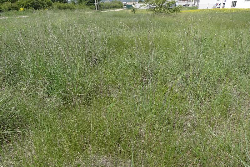 Terrain Sault Village,   achat terrain   501m²