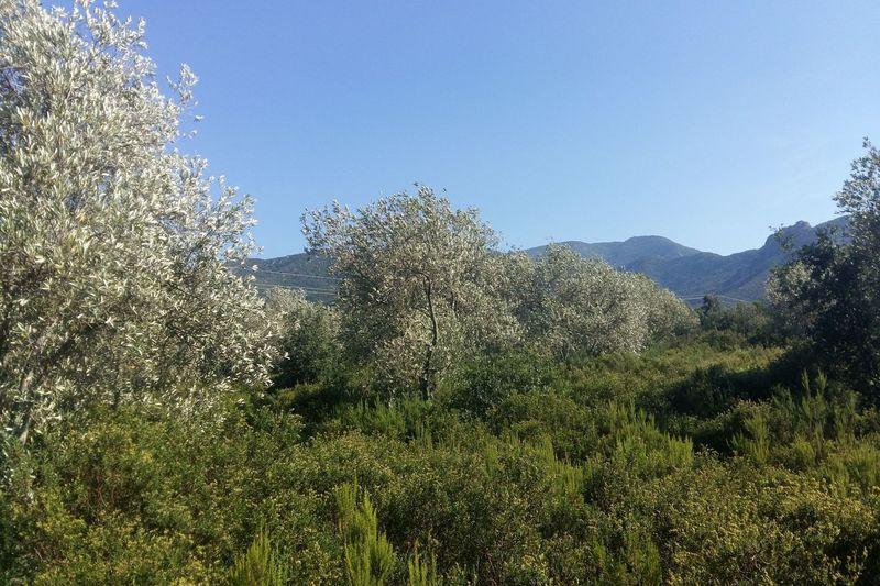 Terrain de loisirs Argelès-sur-Mer Les albères,   achat terrain de loisirs   8370m²