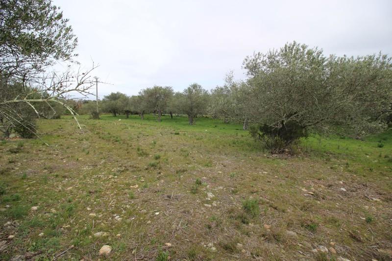 Agricultural land Argelès-sur-Mer Les aspres,   to buy agricultural land   1605m²