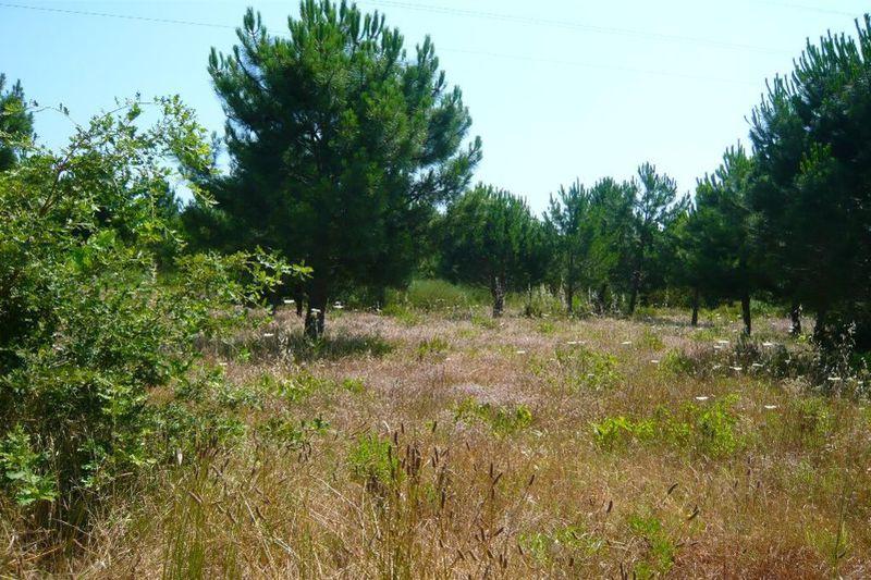 Vente terrain à bâtir Grimaud  Terrain à bâtir Grimaud Golfe de st tropez,   achat terrain à bâtir   3544m²
