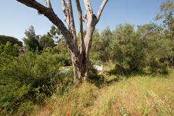 Vente terrain Grimaud IMG_2528