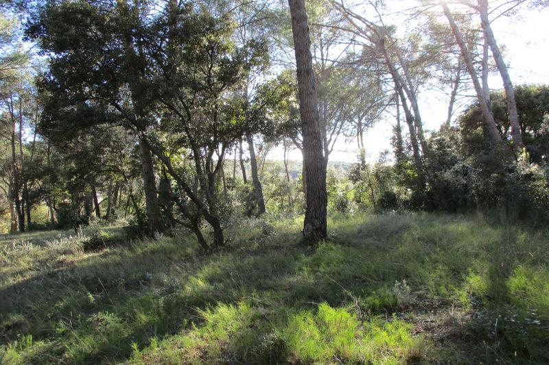 Photo Terrain Clapiers   achat terrain   1631m²