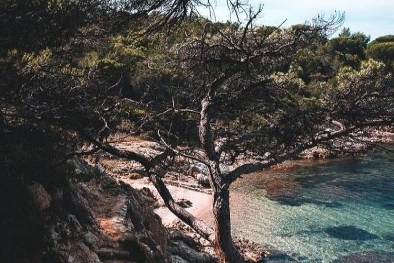 Villa provençale La Croix-Valmer Front de mer,   achat villa provençale  5 chambres   200m²