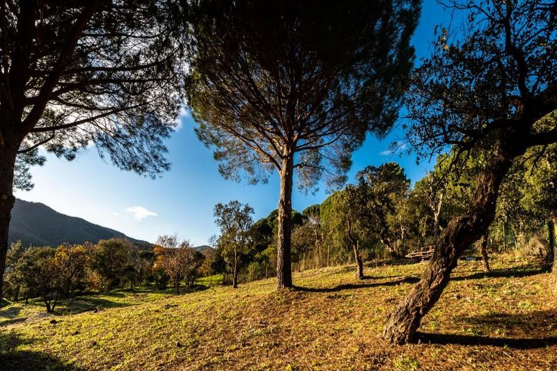 Photo n°4 - Vente terrain Le Plan-de-la-Tour 83120 - 295 000 €
