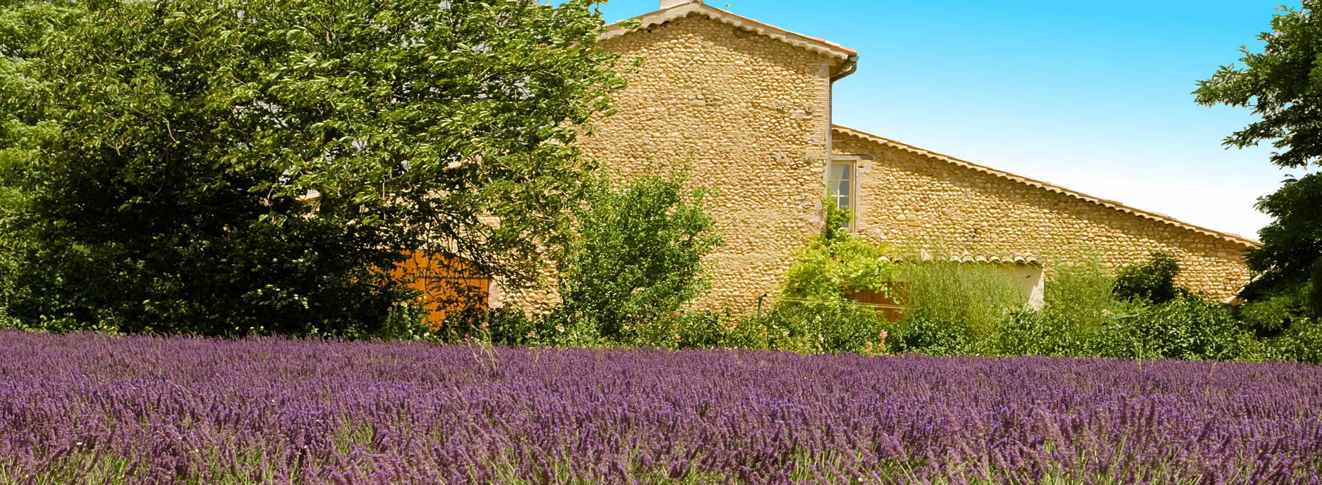 Maison et lavande provençale