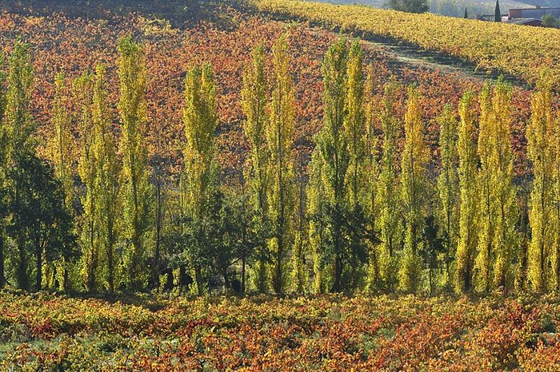 Photos aux portes de l'hiver l'automne en Luberon c'est encore une belle saison