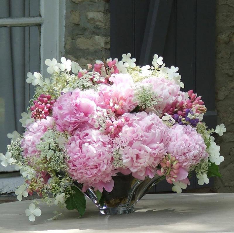 Photos Fleurs de Provence