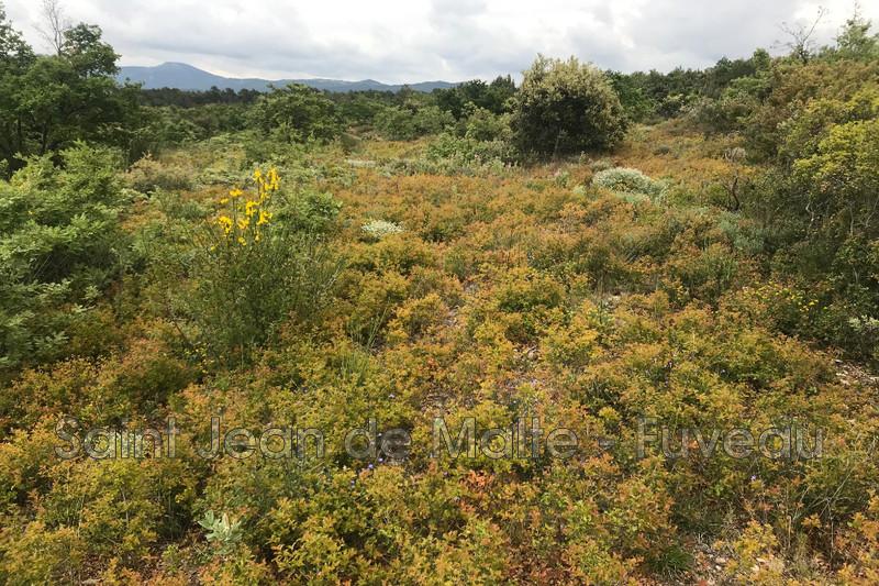 Photo n°1 - Vente terrain Peynier 13790 - 9 000 €