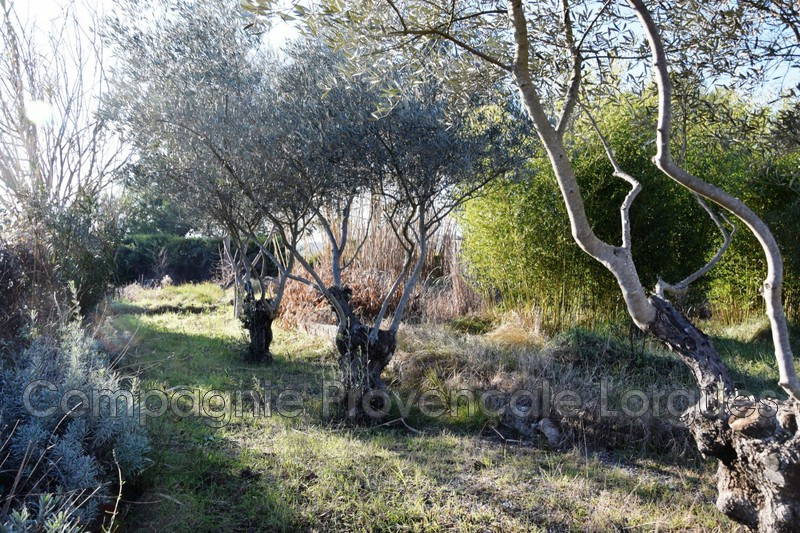 Photo n°3 - Vente terrain Saint-Antonin-du-Var 83510 - 138 300 €
