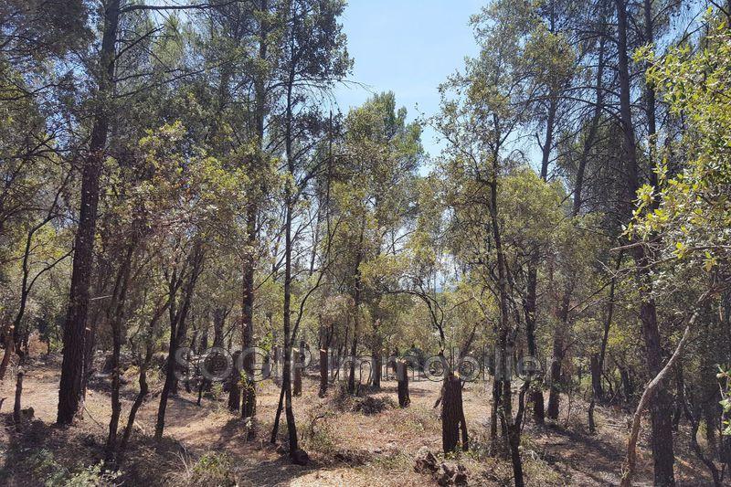 Photo Terrain Flayosc Campagne,   achat terrain   10000m²