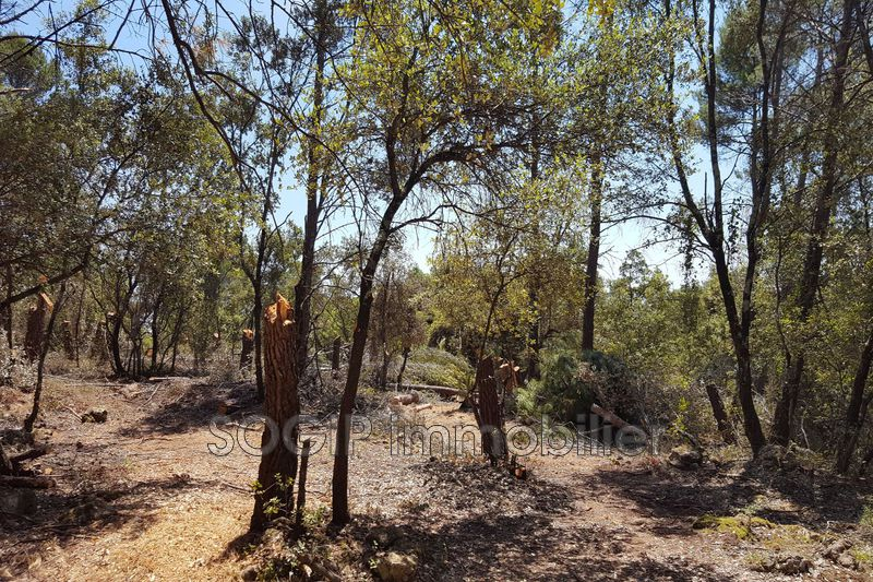 Photo n°3 - Vente terrain Flayosc 83780 - 175 000 €