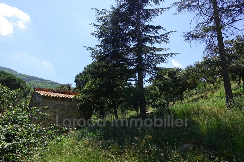 Photo n°9 - Vente Maison mas Laroque-des-Albères 66740 - 365 000 €