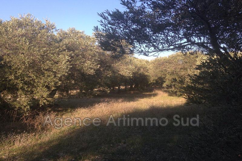 Photo n°4 - Vente terrain agricole Mouriès 13890 - 25 000 €