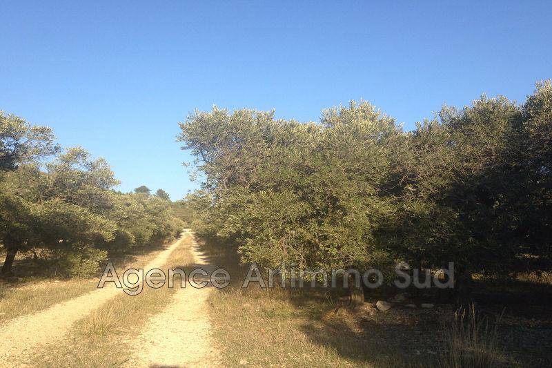 Photo Terrain agricole Mouriès Village,   achat terrain agricole   3000m²