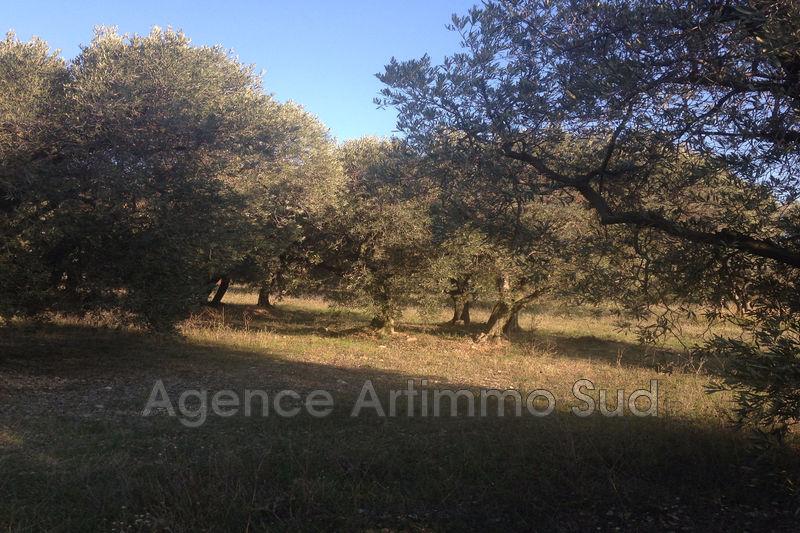 Photo n°2 - Vente terrain agricole Mouriès 13890 - 25 000 €