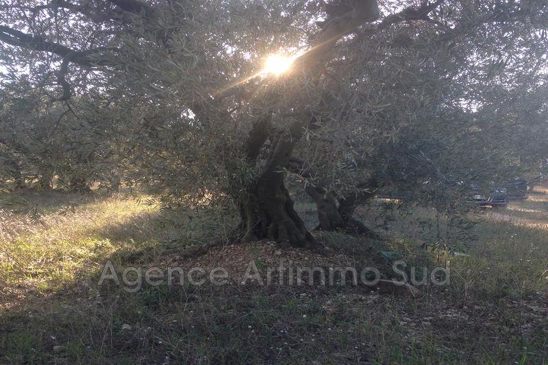 Photo n°3 - Vente terrain agricole Mouriès 13890 - 25 000 €