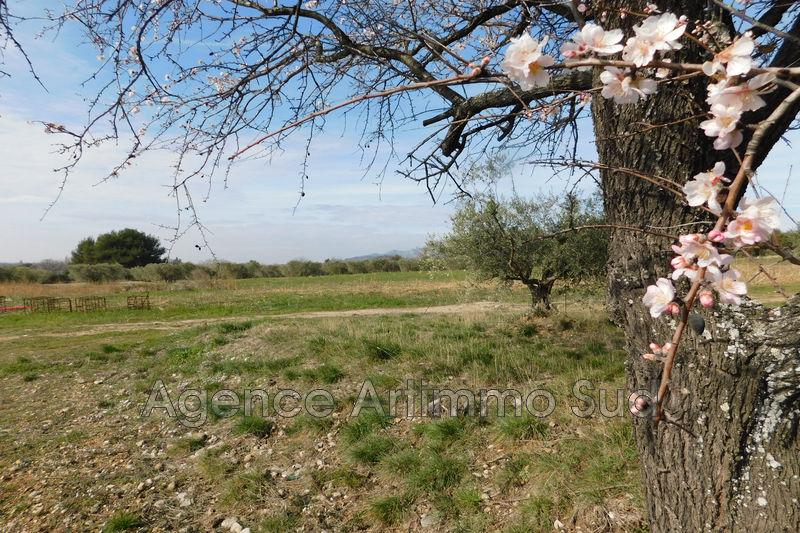 Photo Terrain agricole Eyguières Alpilles,   achat terrain agricole   11000m²