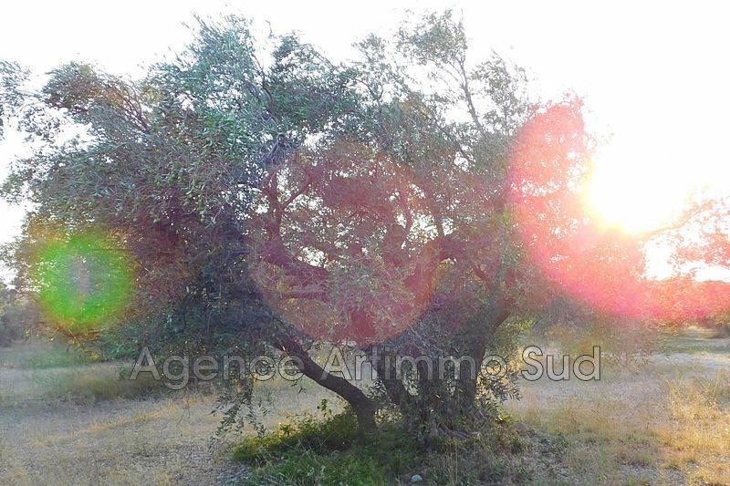 Photo Agricultural land Mouriès   to buy agricultural land   29830 m²