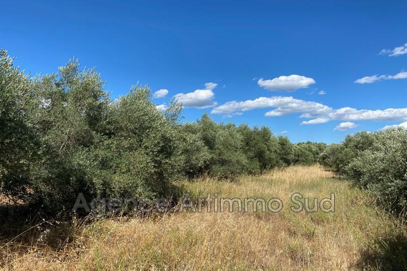 Photo Terrain agricole Aureille   achat terrain agricole   6000m²