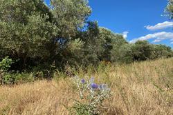 Vente terrain agricole Aureille