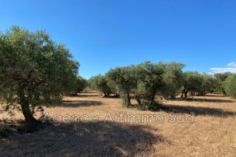 Photo n°2 - Vente terrain agricole Aureille 13930 - 36 000 €