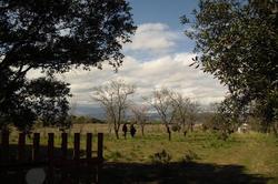 Photos  Terrain de loisirs à vendre Maureillas-las-Illas 66480