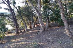 Vente terrain constructible Grimaud 20190215_172554
