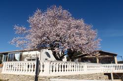 Photos  Maison Villa à vendre Uzès 30700