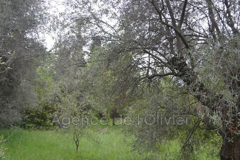 Photo Land opio Village,   to buy land   1000 m²