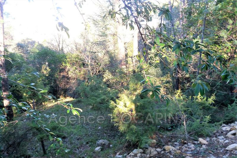 Photo n°2 - Vente terrain Valbonne 06560 - 255 000 €