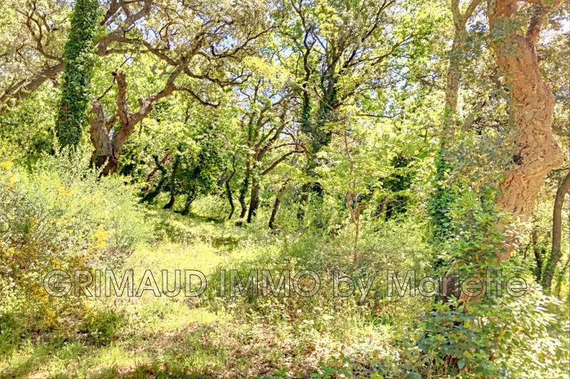 Photo n°3 - Vente terrain La Garde-Freinet 83680 - 315 000 €