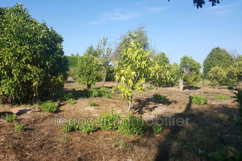 Photo Terrain Vallauris Colline,   achat terrain   900 m²