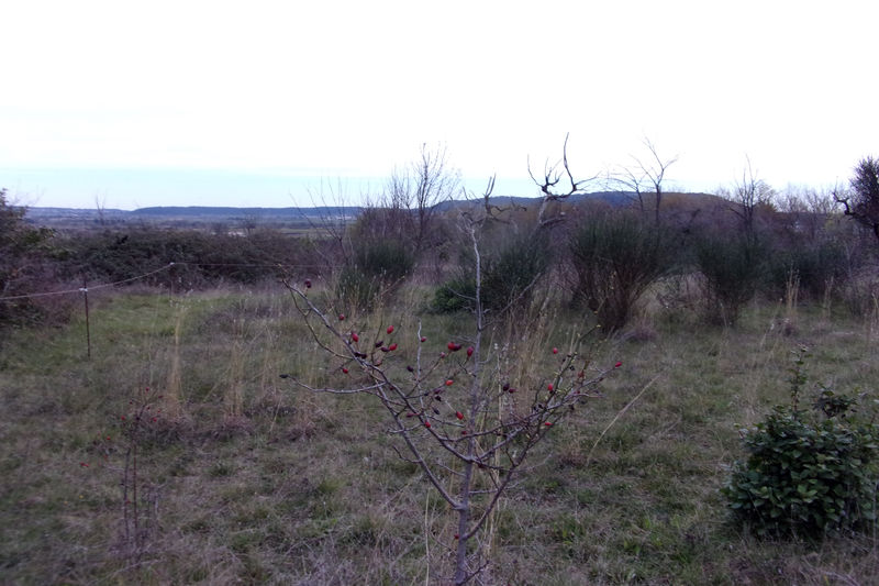 Photo Terrain agricole Calvisson Village,   achat terrain agricole   1518m²
