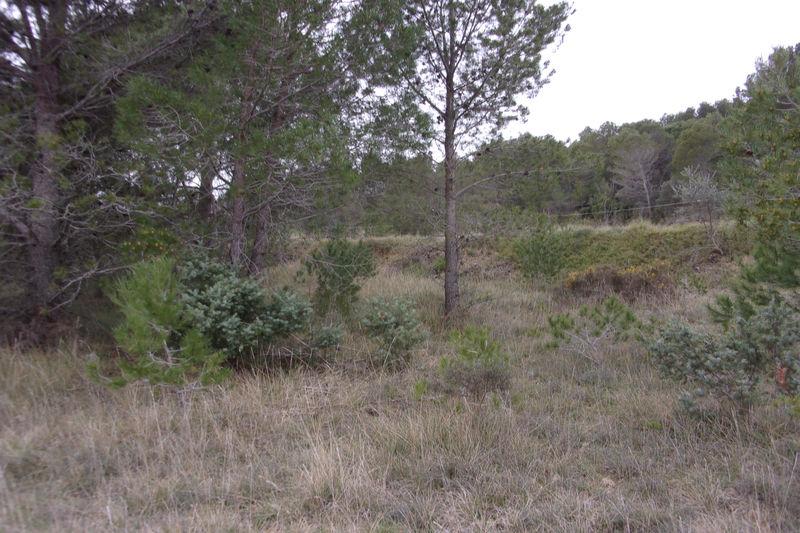Photo Terrain Calvisson Village,   achat terrain   1870m²
