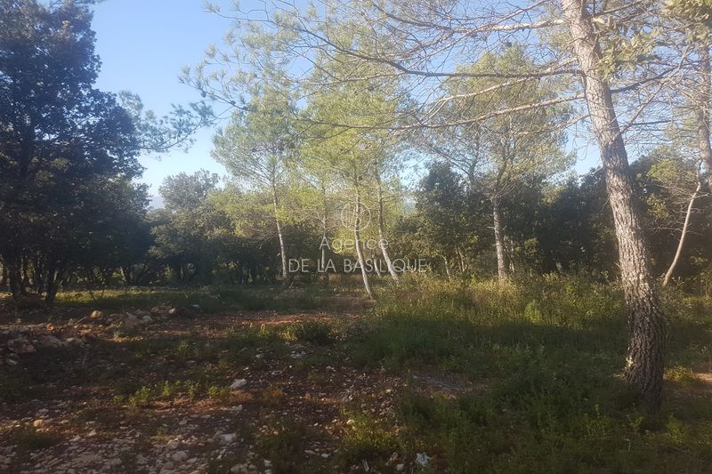 Photo Land Saint-Maximin-la-Sainte-Baume Hors agglomération,   to buy land   2100 m²