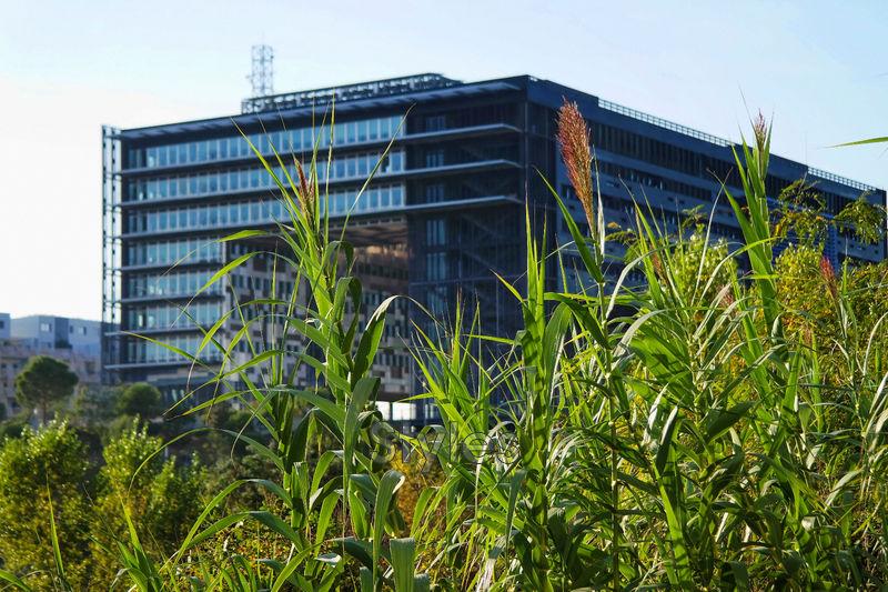 Photo n°3 - Vente appartement Montpellier 34000 - 252 000 €