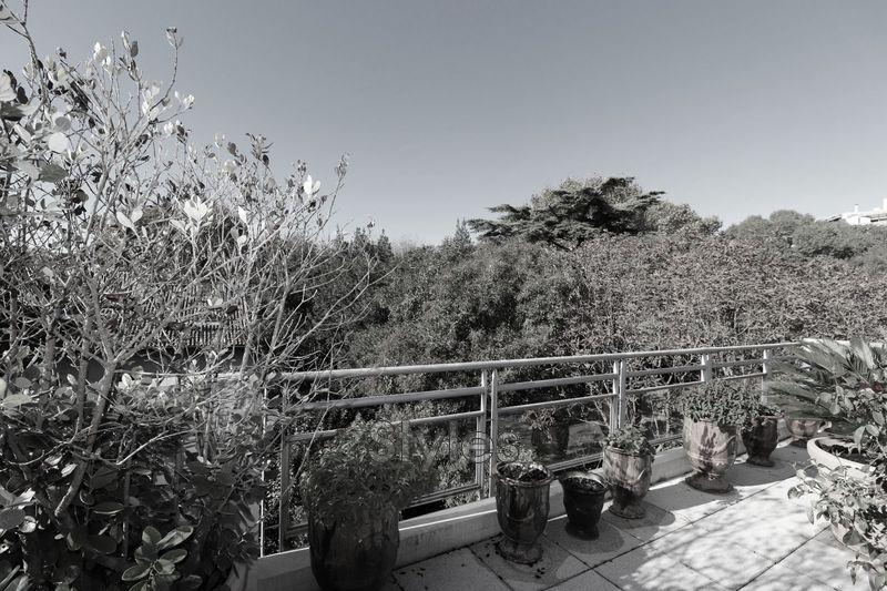 Photo Appartement Montpellier   achat appartement  5 pièces   135m²