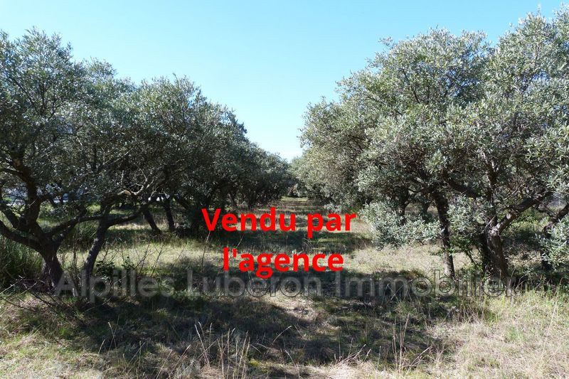 Photo Land Eygalières Proche village,   to buy land   2048 m²
