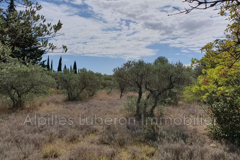 Terrain Eygalières Campagne,   achat terrain   2500m²