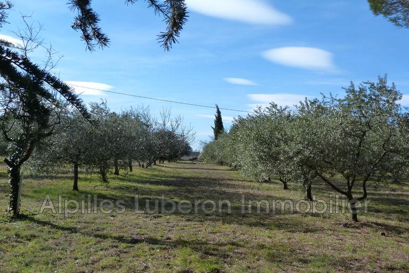Photo n°4 - Sale nature maison de campagne Saint-Rémy-de-Provence 13210 - 840 000 €