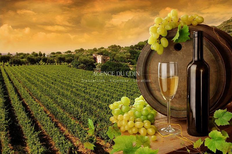 Domaine viticole Le Muy Campagne,   to buy domaine viticole  5 bedroom   250m²