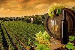Photos  Maison Domaine viticole à vendre Le Muy 83490