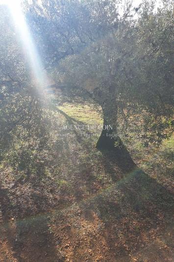 Photo n°3 - Vente terrain Trans-en-Provence 83720 - 129 000 €