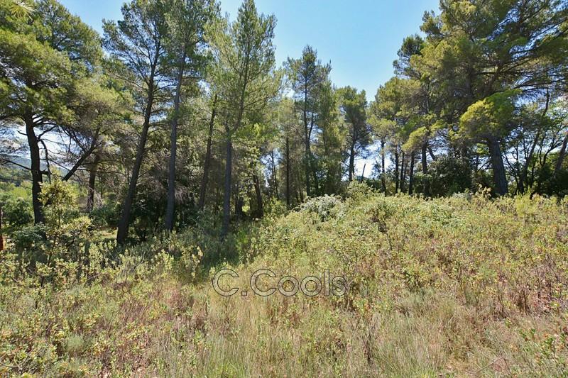 Photo n°2 - Vente terrain Tourtour 83690 - 155 000 €