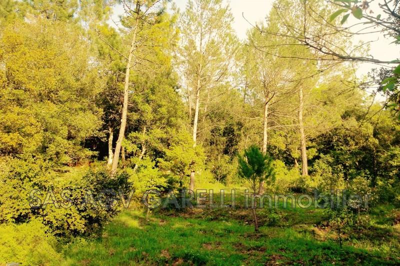 Photo n°4 - Vente maison de campagne Gonfaron 83590 - 321 000 €