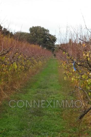 Photo Terrain agricole Saint-Gilles Costieres,   achat terrain agricole   3490m²
