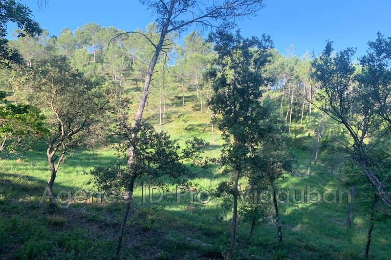 Photo n°3 - Vente terrain Vidauban 83550 - 115 000 €