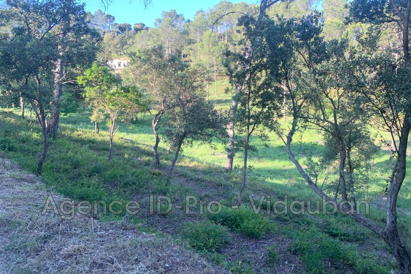 Photo n°9 - Vente terrain Vidauban 83550 - 115 000 €