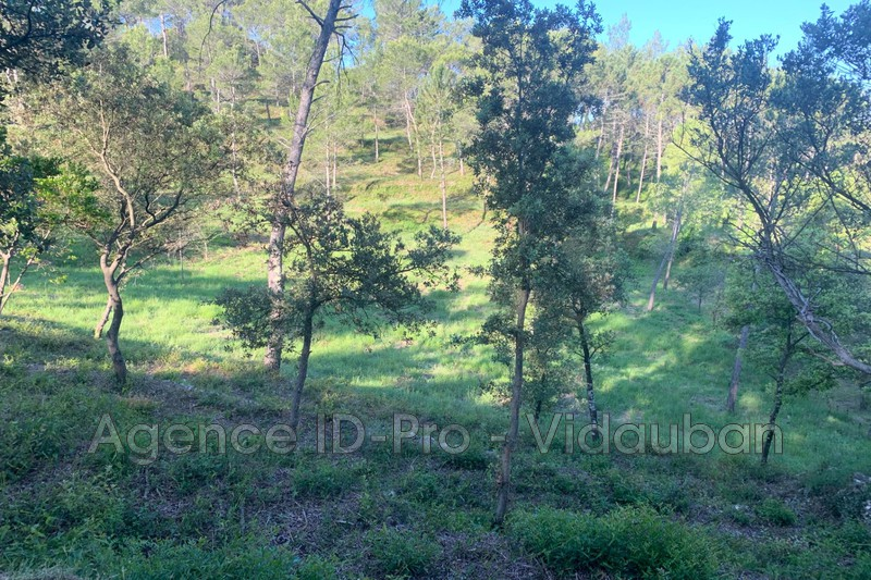 Photo n°10 - Vente terrain Vidauban 83550 - 115 000 €